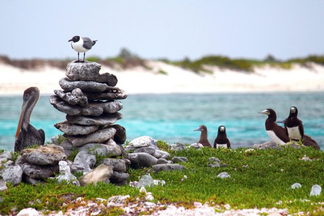 The diversity of sea birds grabs your attention