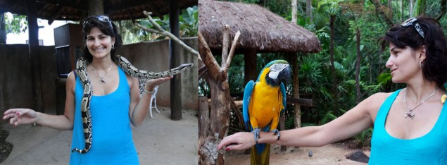 A baby anaconda, the blue-and-yellow macaw and I