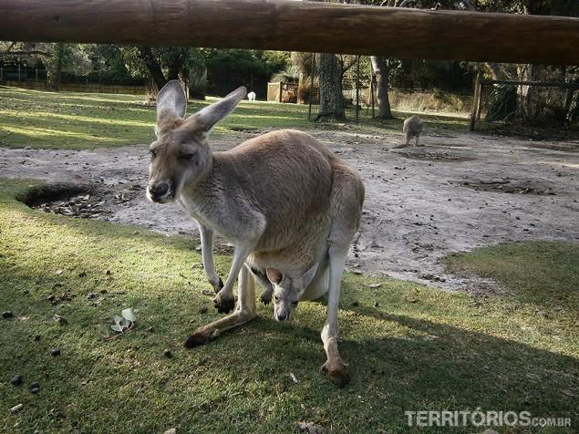Cavershawn Wild Life Park, Whiteman, Western Australia - Australia