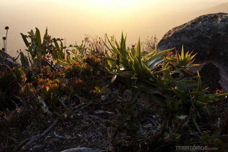 Mount Roraima Expedition