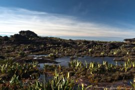 Garden on the summit of Monte Roraima